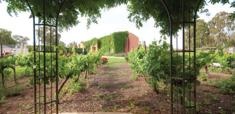 Golan-Wines